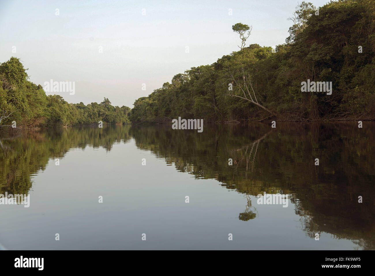 Bank and riparian vegetation of the Rio Cristalino - Stock Image