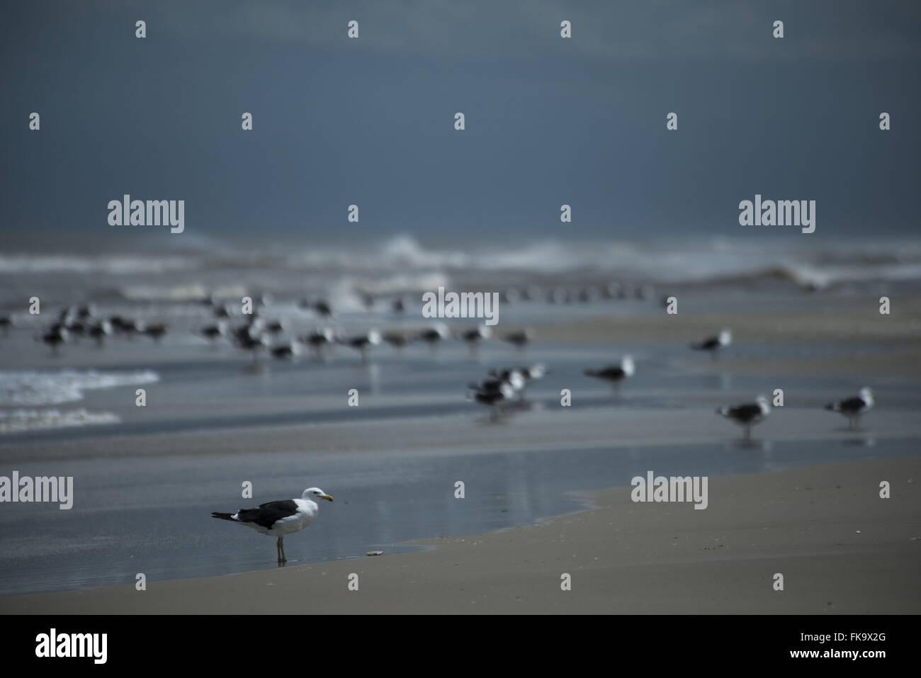 Seagulls on the sea - migratory bird Stock Photo