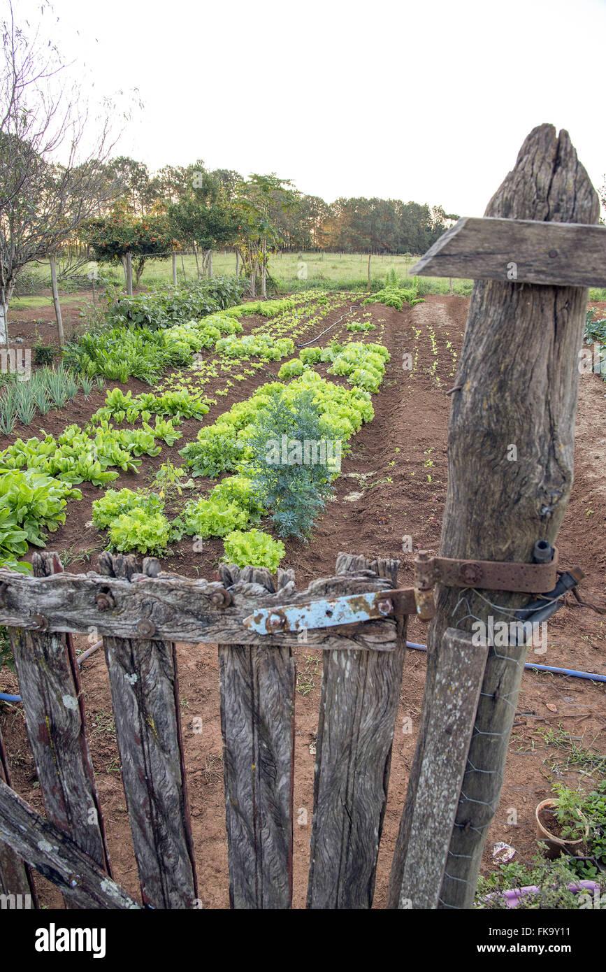 Horta orgânica de agricultura familiar - Stock Image