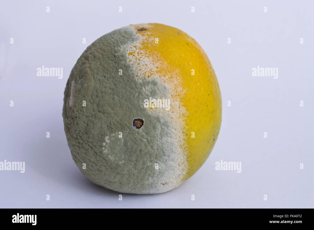 Orange with mold - Stock Image