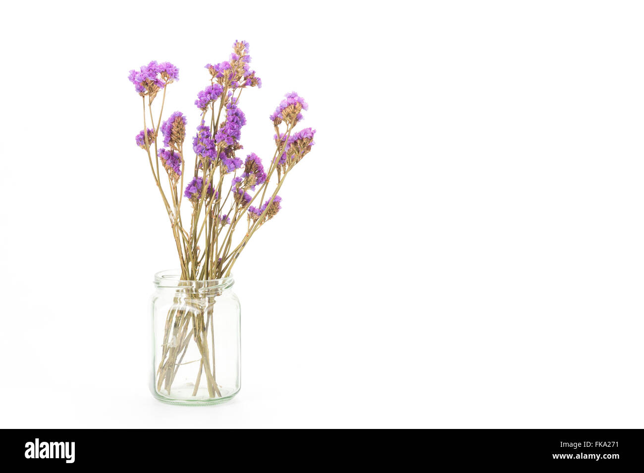 Dried Statice flowers isolated on white background, Copy space - Stock Image
