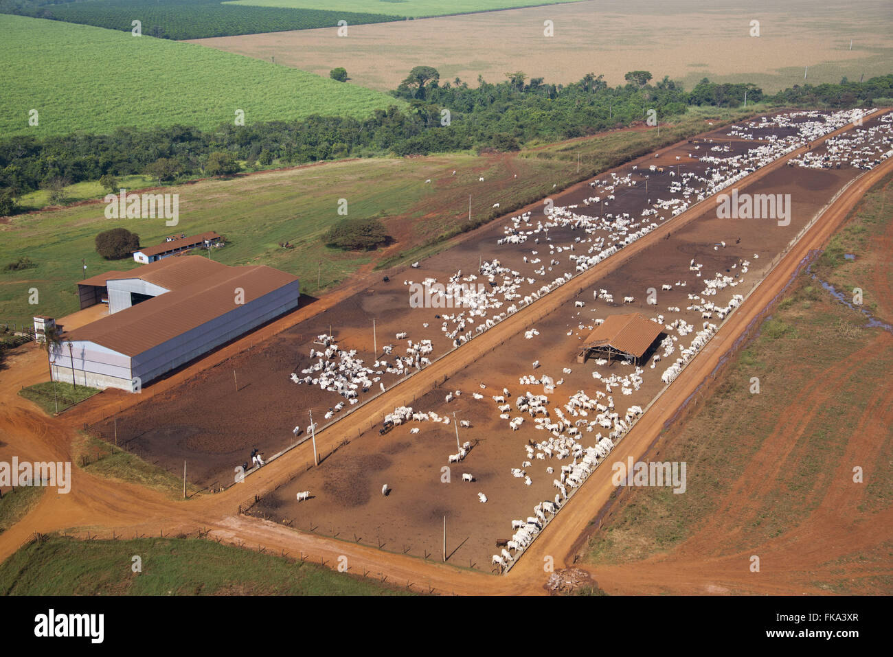 Aerial view of farm creation of cattle confined - Stock Image