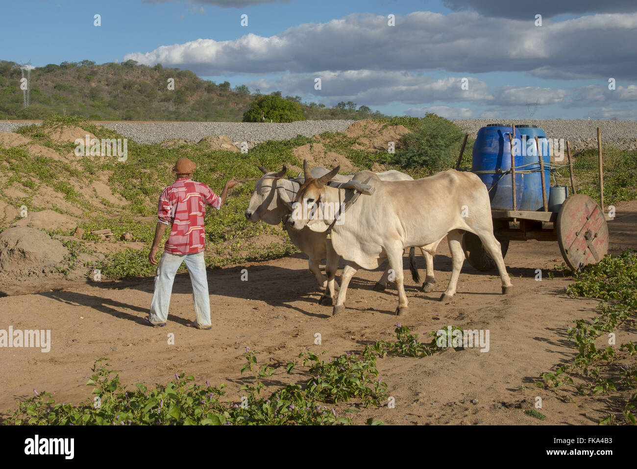 Backcountry with oxcart fetching water to village in the countryside - Stock Image
