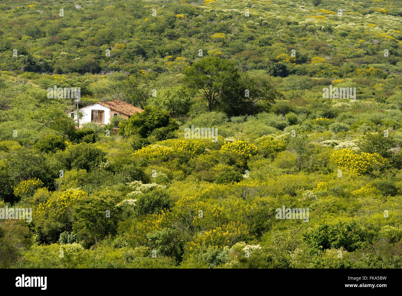 House kills backcountry in the transition to flowering acacias Sierra de Buique in the rainy season - Stock Image