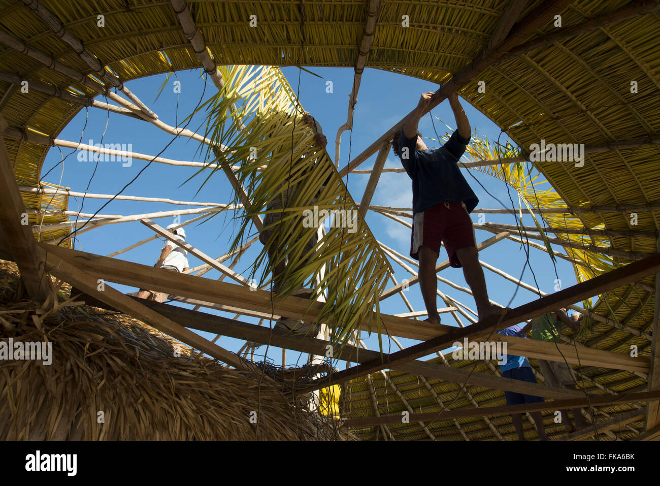 Workers put coverage kiosk with Curuá-Pixuna straw in Alter do Chao - Stock Image