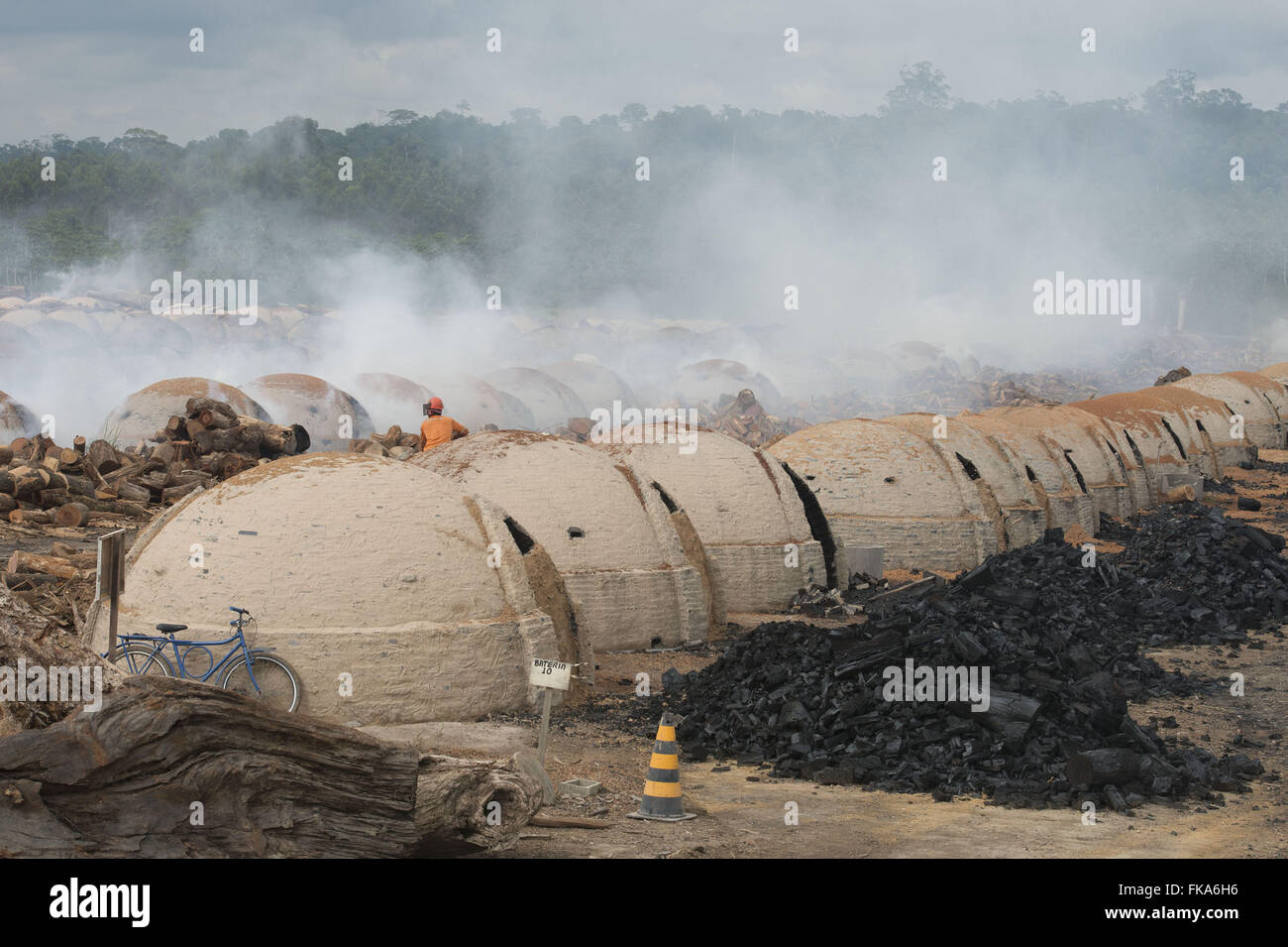 Production of coal for steel with wood chip forest management - Stock Image