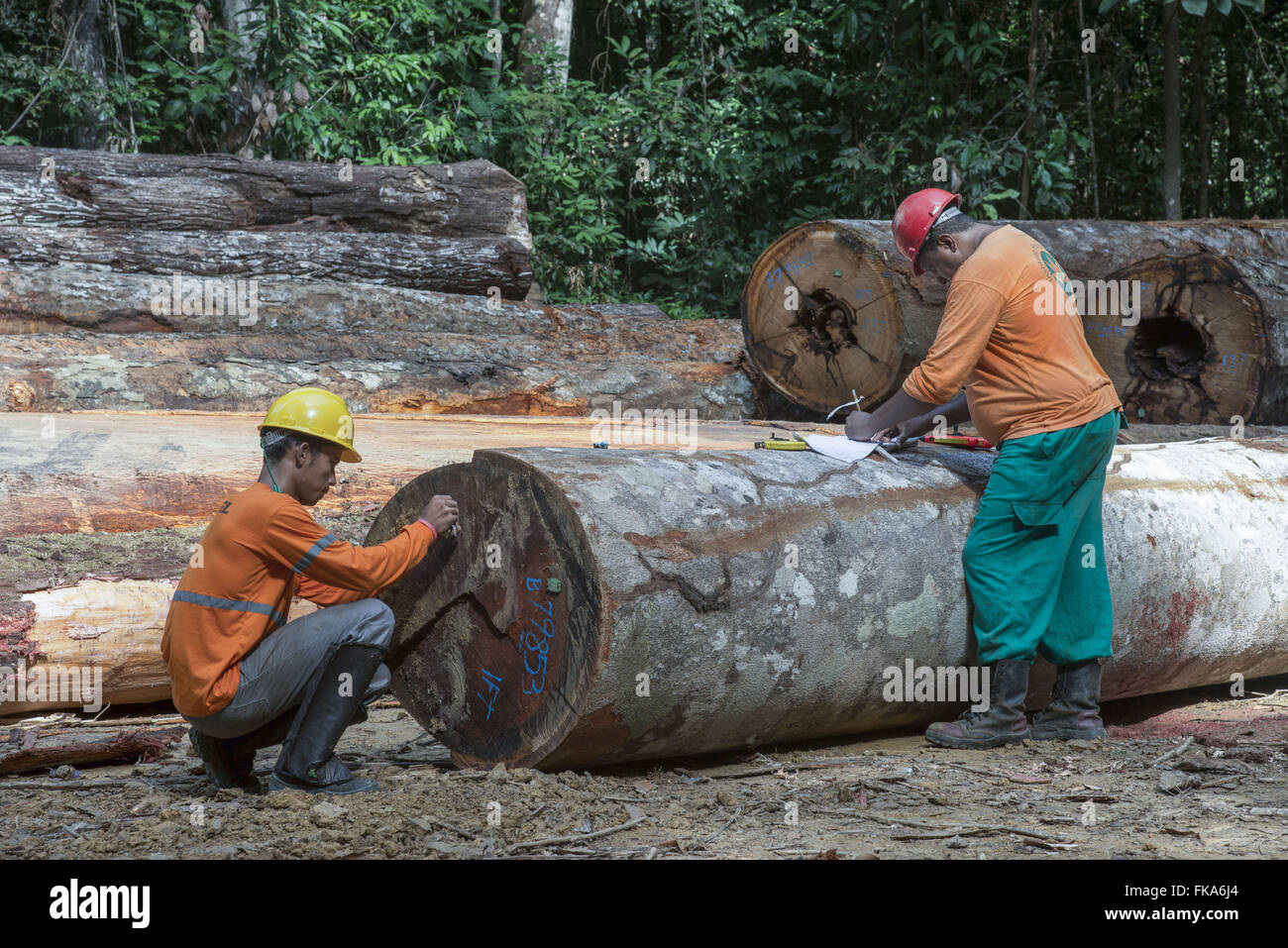 Officials wood extraction company for forest management system - Stock Image