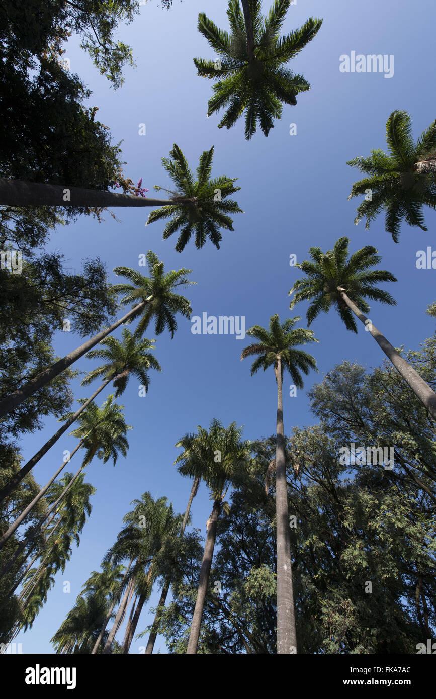 Alameda de palmeiras na Praça da Liberdade - bairro Savassi - Stock Image