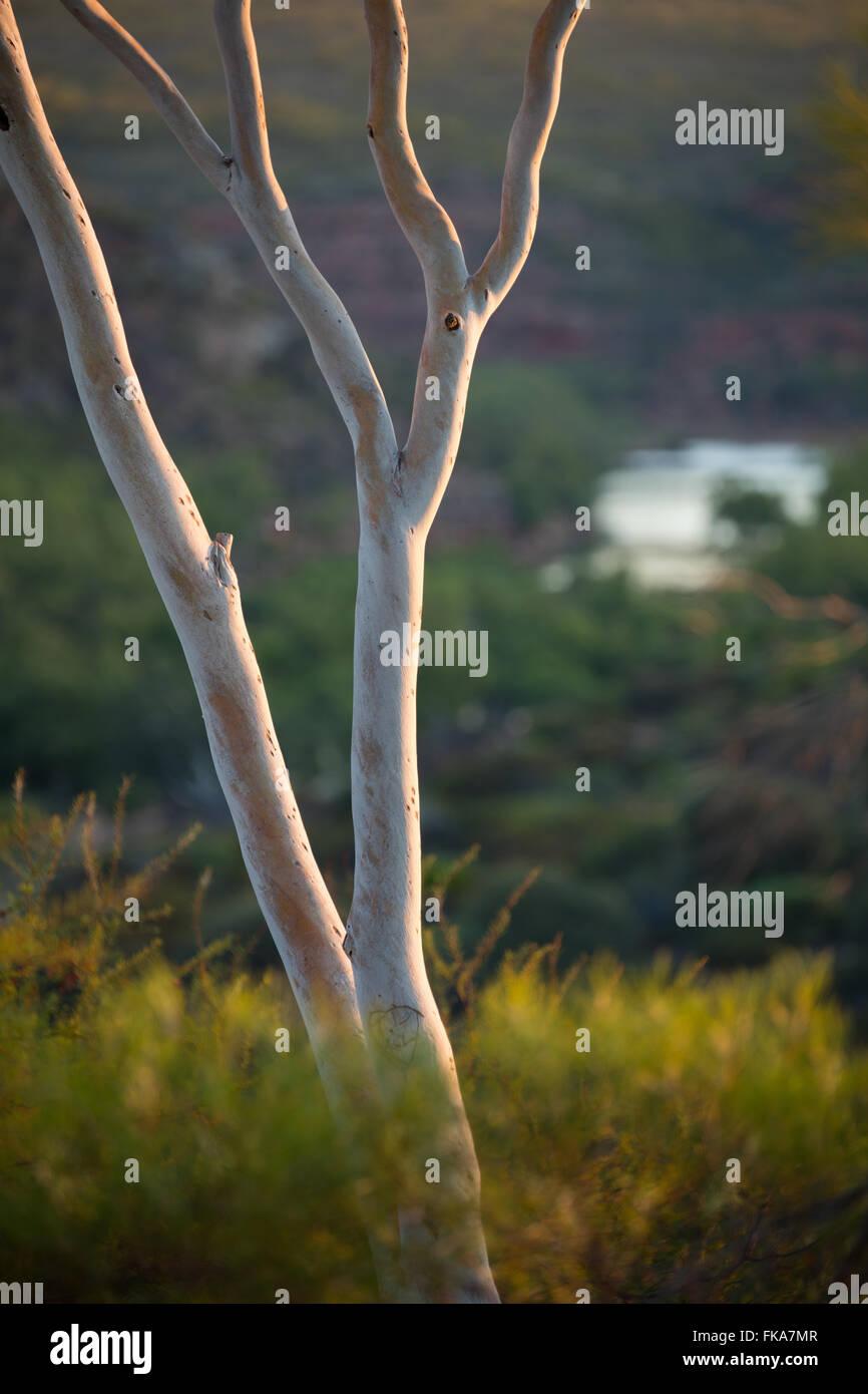 first light on the bush at Ross Graham Lookout, Murchison River Gorge, Kalbarri National Park, Western Australia - Stock Image
