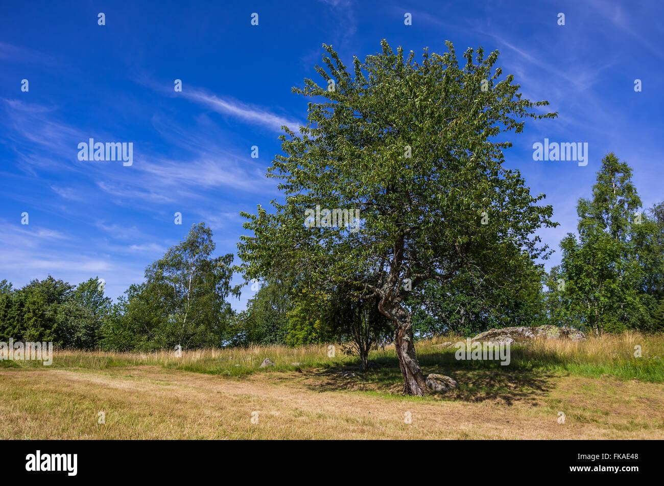 SUMMER TREE IDYLL - Stock Image