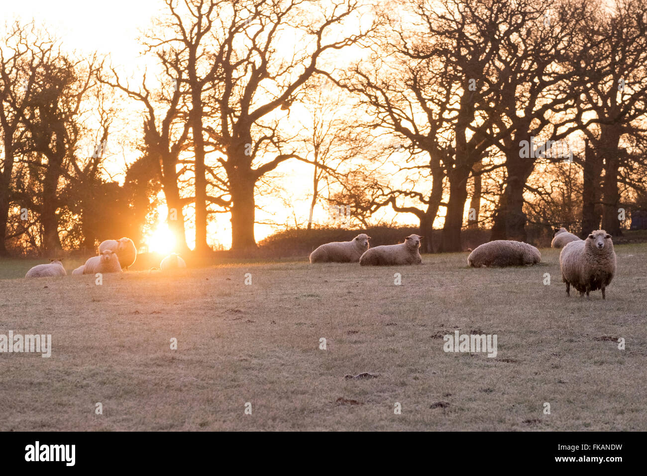 UK weather, With overnight temperatures dipping below freezing, Arundel starts the day with a heavy but scenic frost, - Stock Image