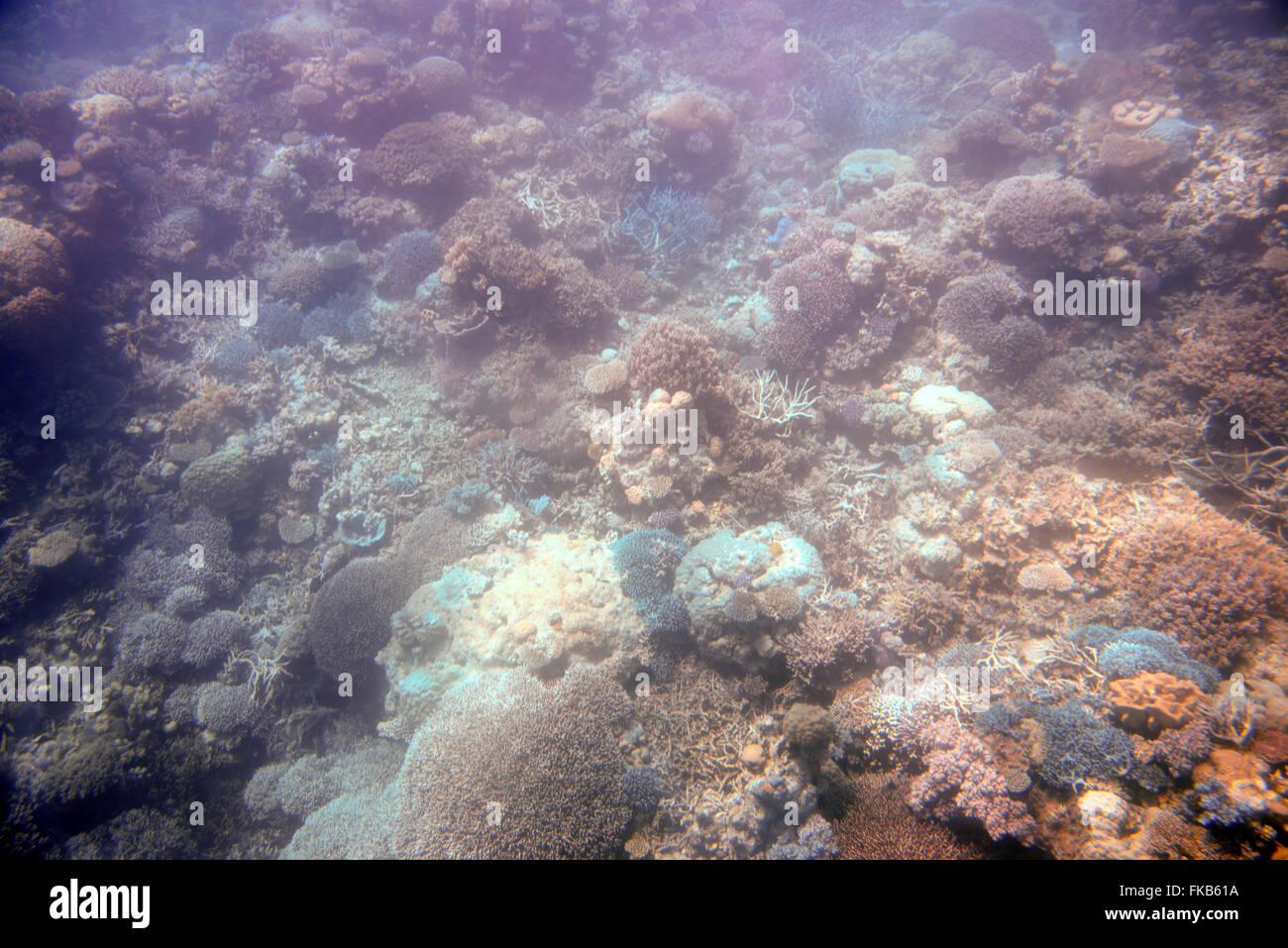 Great Barrier Reef, Queensland, Australia, Agincourt Reefs, UNESCO World Heritage List, commercialism, tourism, - Stock Image