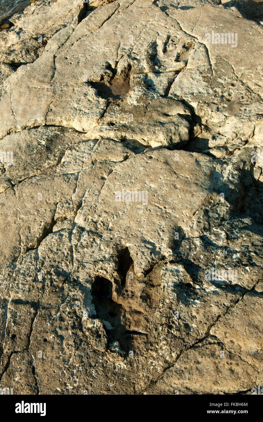 Kroatien, Istrien, Insel Veli Brijuni im Nationalpark Brijuni-Inseln vor Pula. Dinosaurier-Fussabdruck - Stock Image