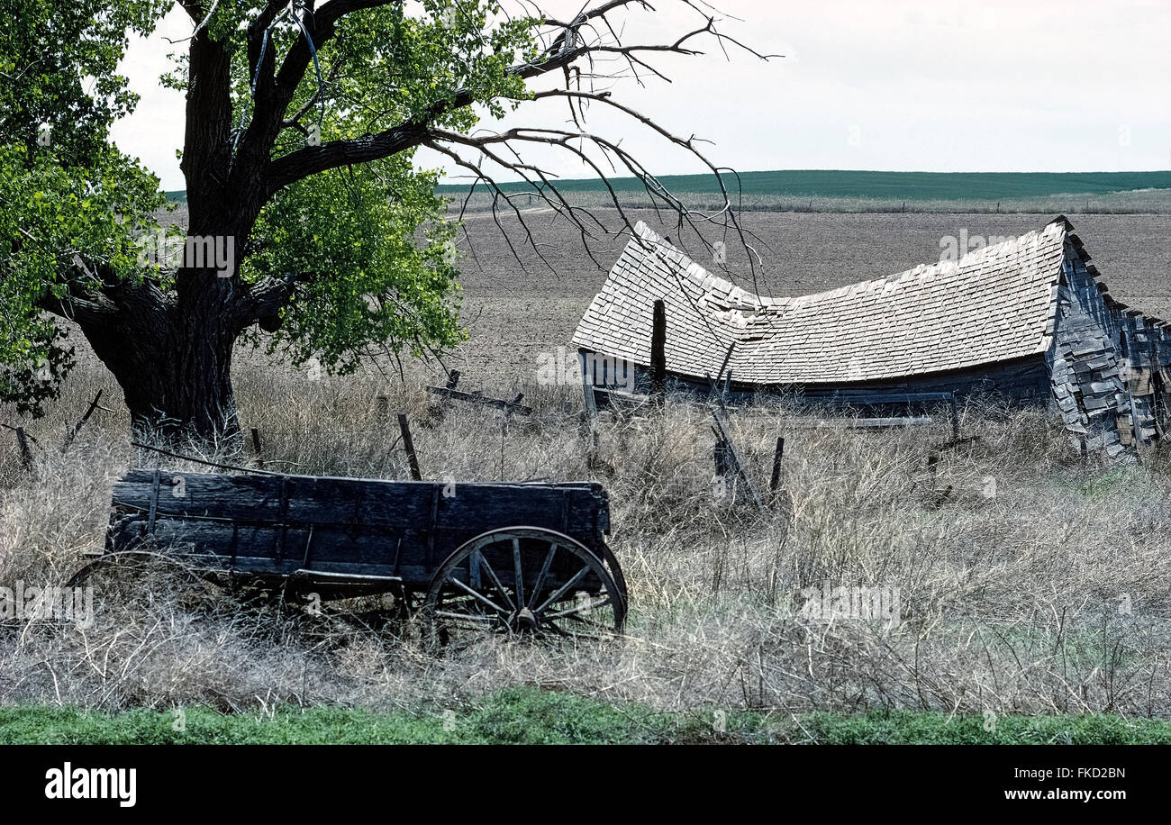 A collapsed wooden cabin and an abandoned farm wagon surrounded by weeds beneath an age-old tree are the only remains - Stock Image