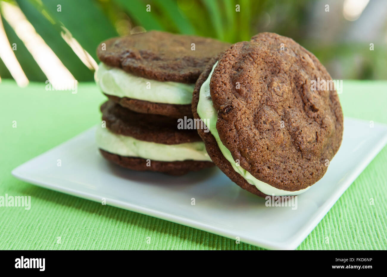 Ice cream Sandwich - double chocolate chip cookie with mint ice cream with tropical background - Stock Image