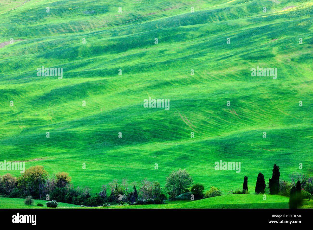 Green rolling landscape - Stock Image