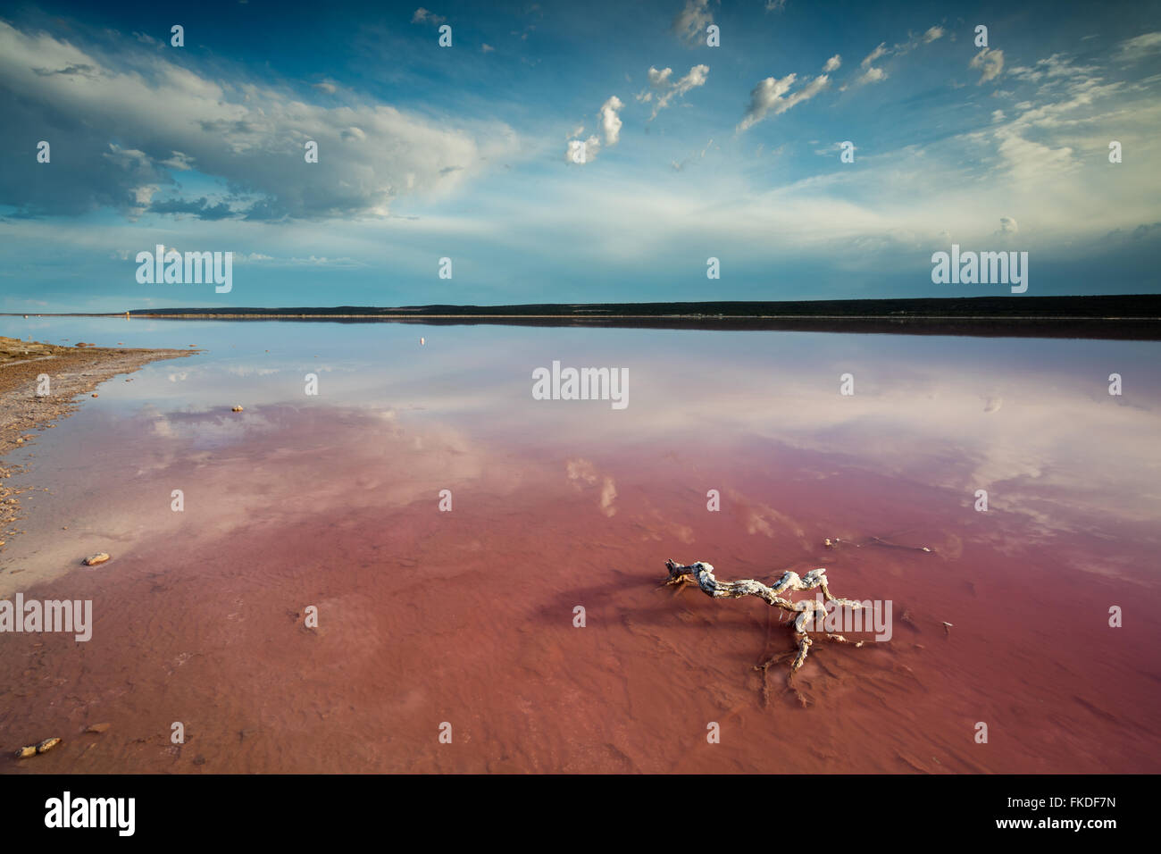 the pink lagoon at Port Gregory, West Australia - Stock Image