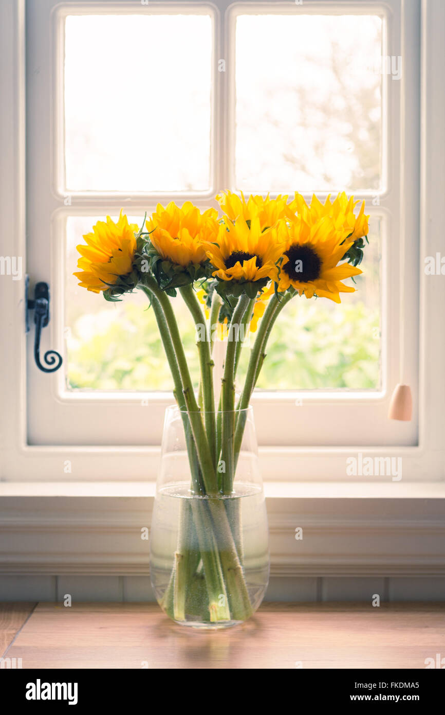 sunflowers in vase in front of traditional window - Stock Image