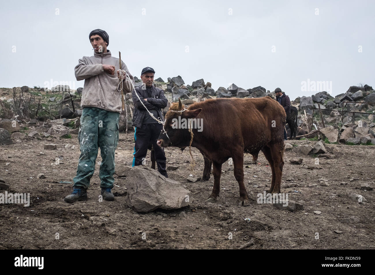 Scene from an open air animal market in Georgia close to the Azerbaijan border. A ma smokes while he holds a tethered - Stock Image