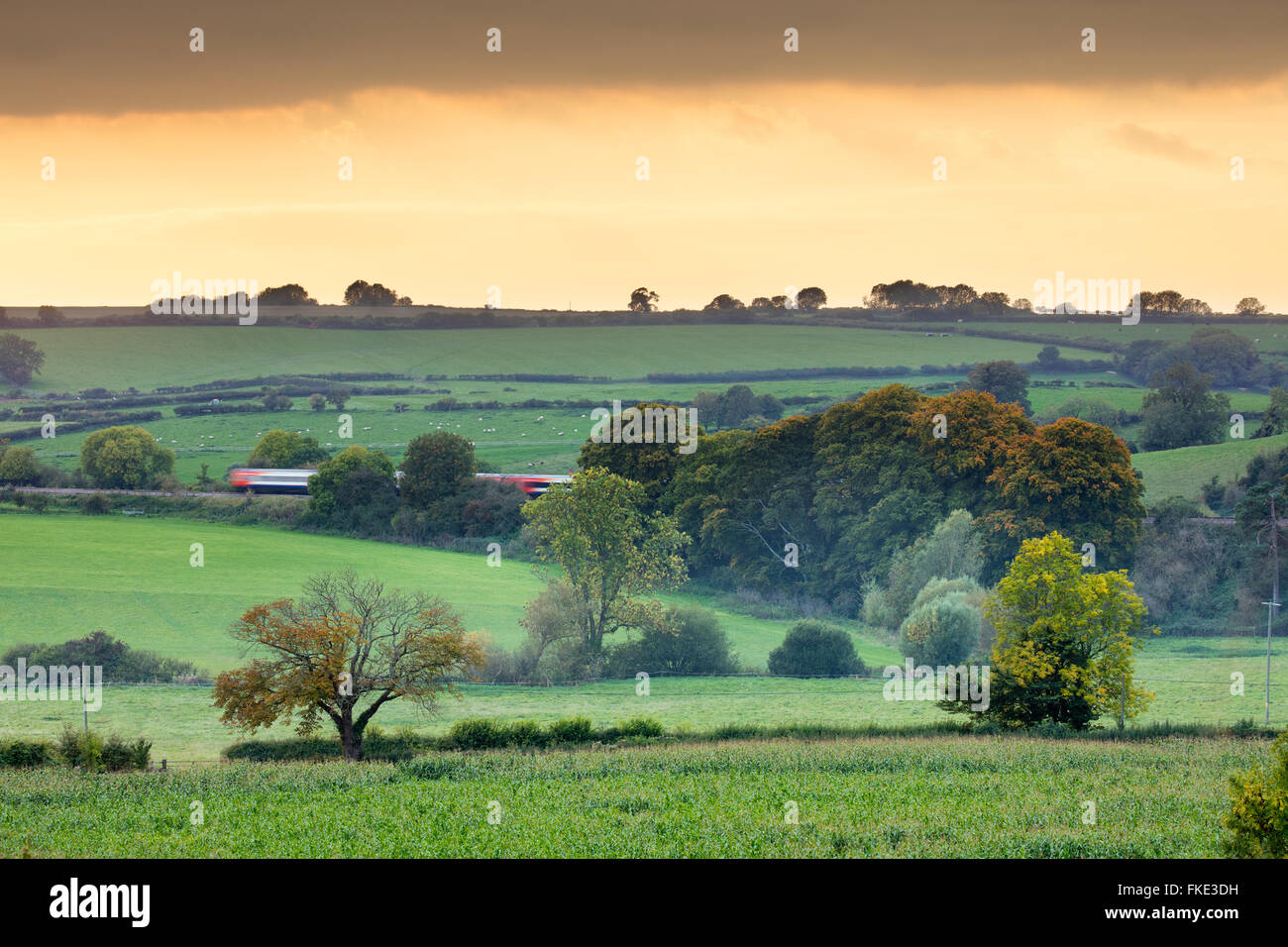 the train passing amongst the autumn colours in the valley around Milborne Wick, Somerset, England, UK - Stock Image