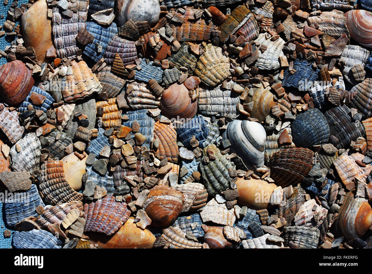 Sea shell pieces, details, fragments, Goeree-Overflakkee, South Holland province, North Sea Coast, Zeeland province - Stock Image