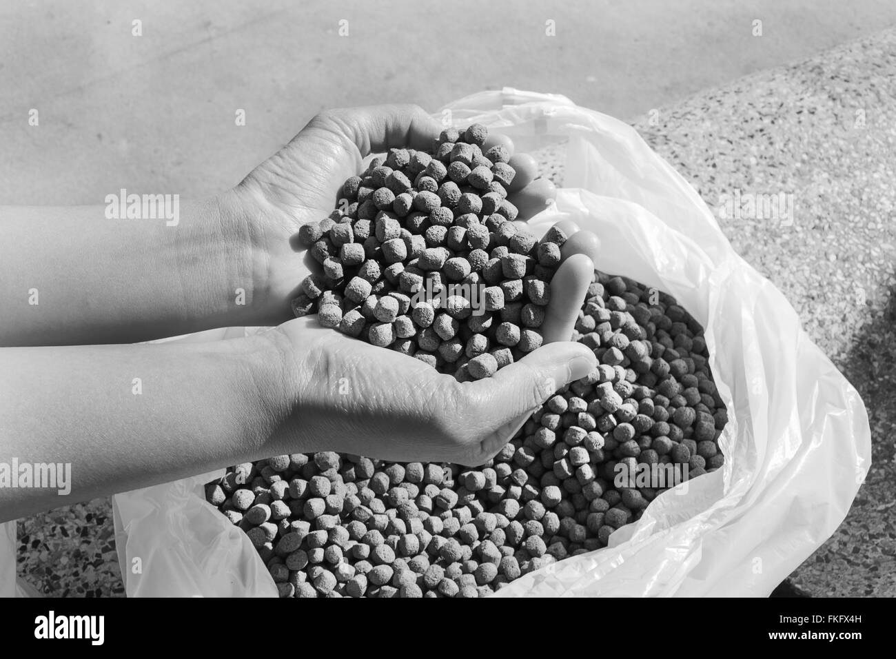 fish feed - Stock Image