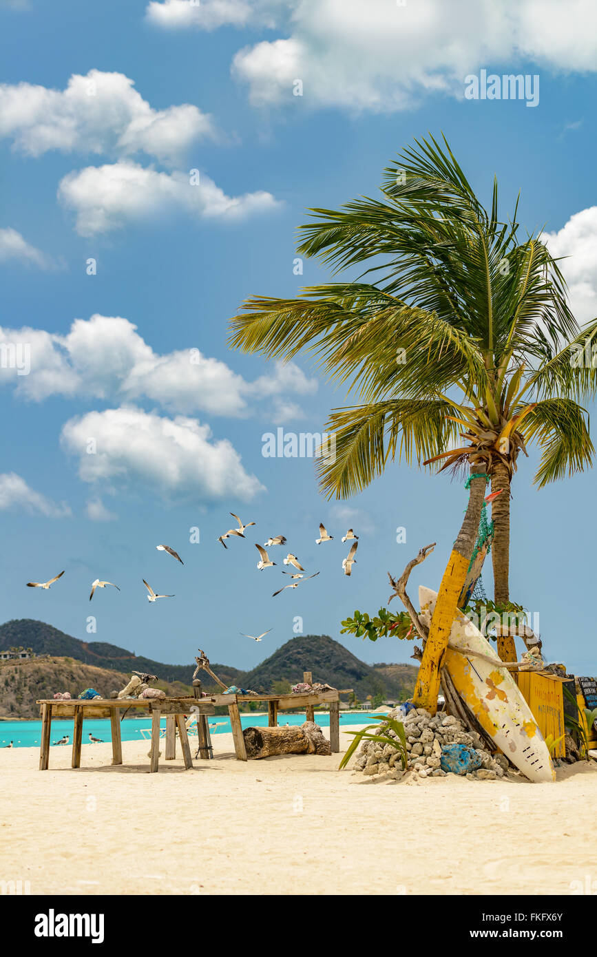 Tropical beach at Antigua island in Caribbean with white sand, turquoise ocean water and blue sky - Stock Image