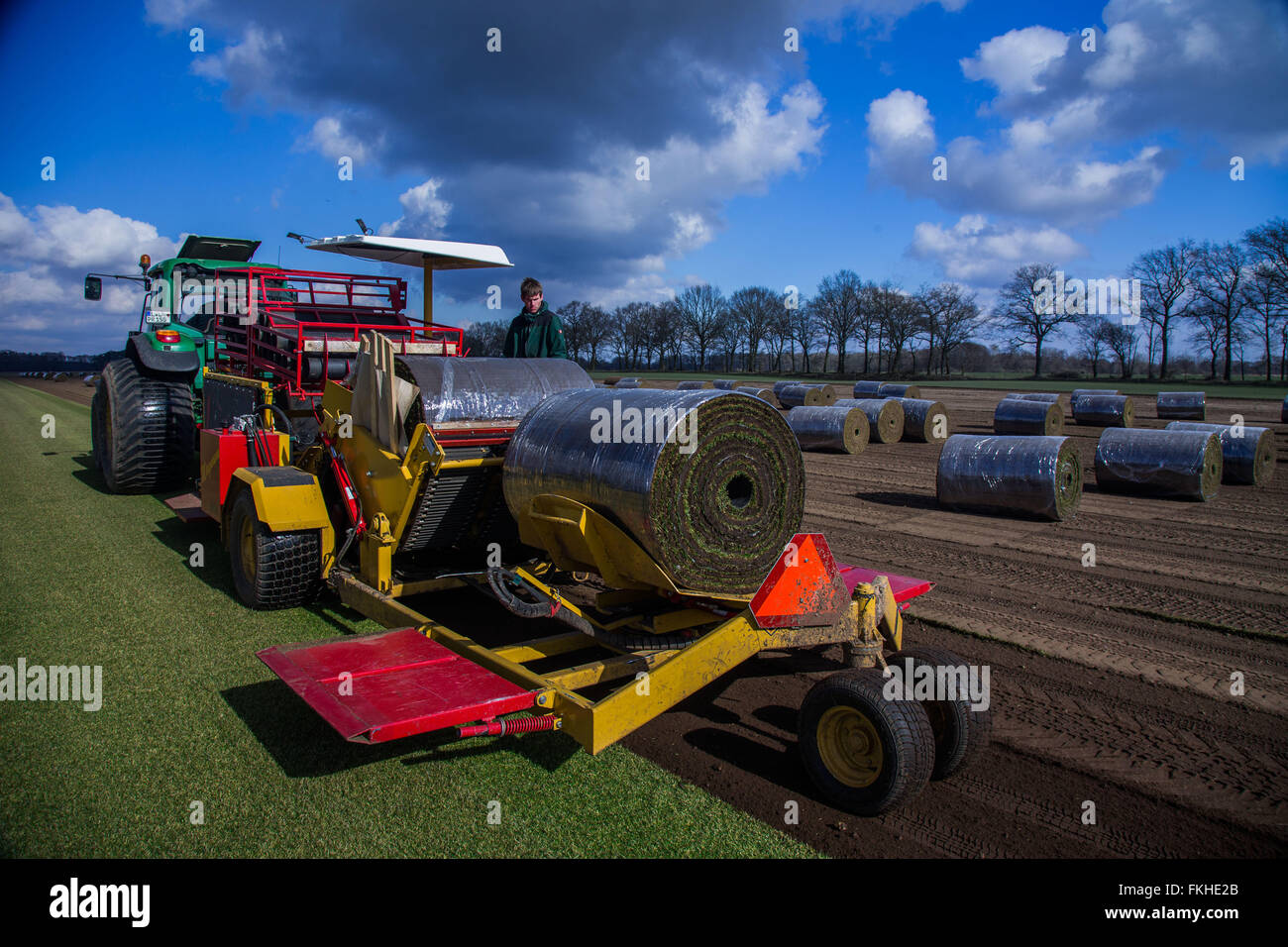 A staff member operates a special machine that peels and rolls up metres long sod lawn from the field near Alt Zachun - Stock Image
