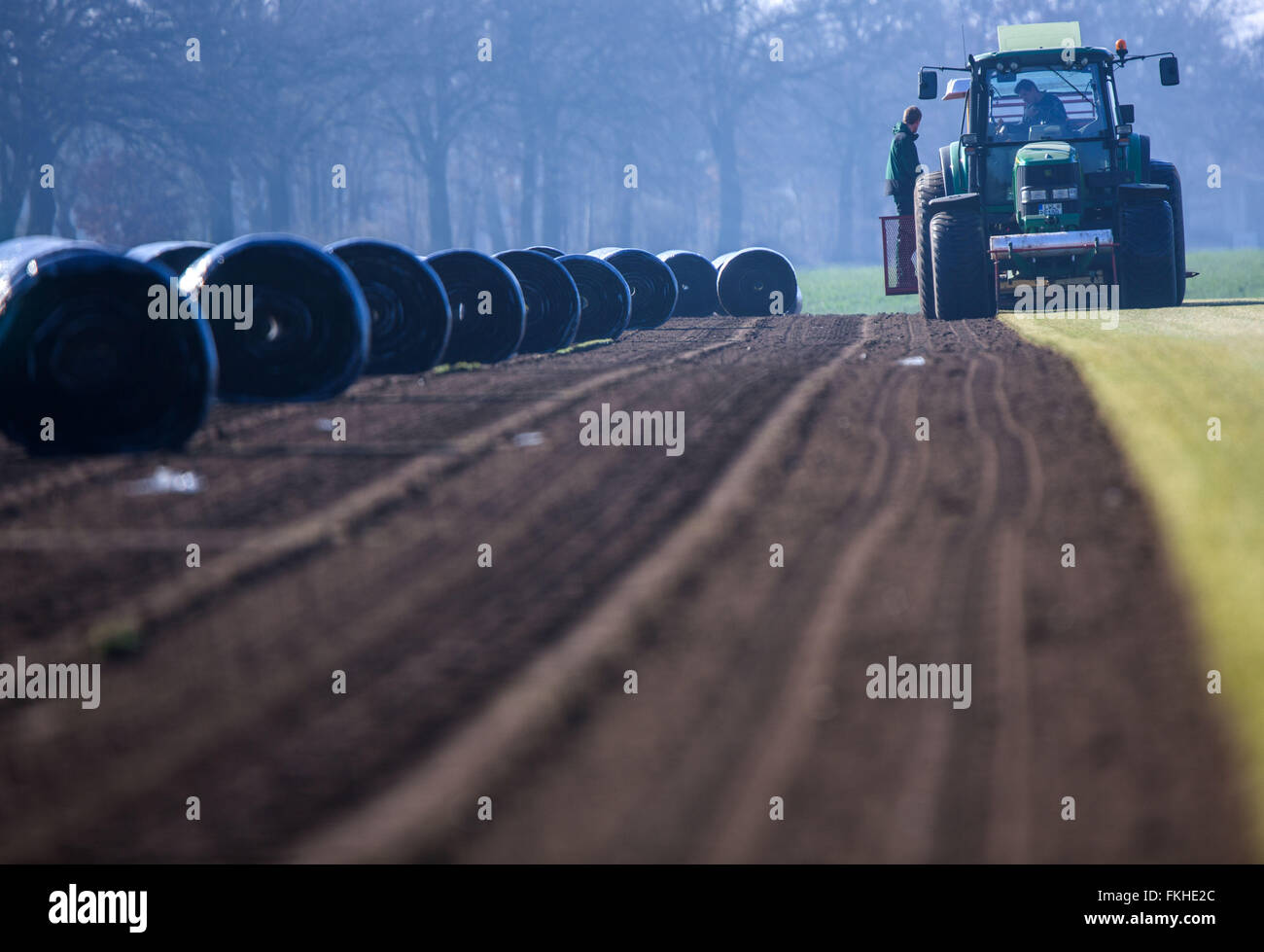 Staff members operate a special machine collecting finished grown sod lawn near Alt Zachun (Mecklenburg-Western - Stock Image