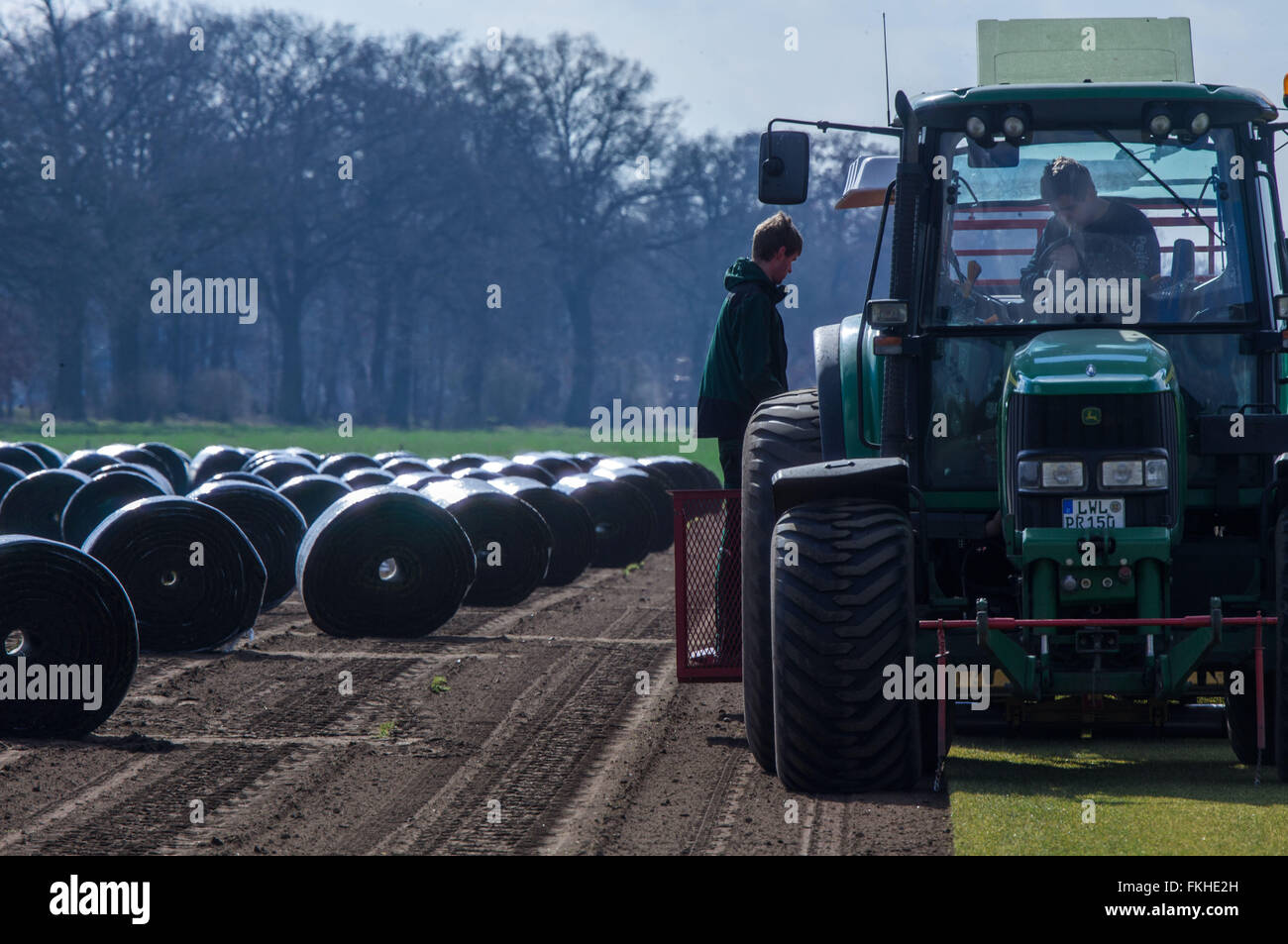 Staff members operate a special machine that peels and rolls up metres long sod lawn from the field near Alt Zachun - Stock Image