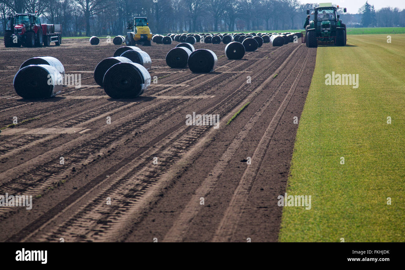 Staff members operate special machines that peel and roll up metres long sod lawn from the field near Alt Zachun - Stock Image