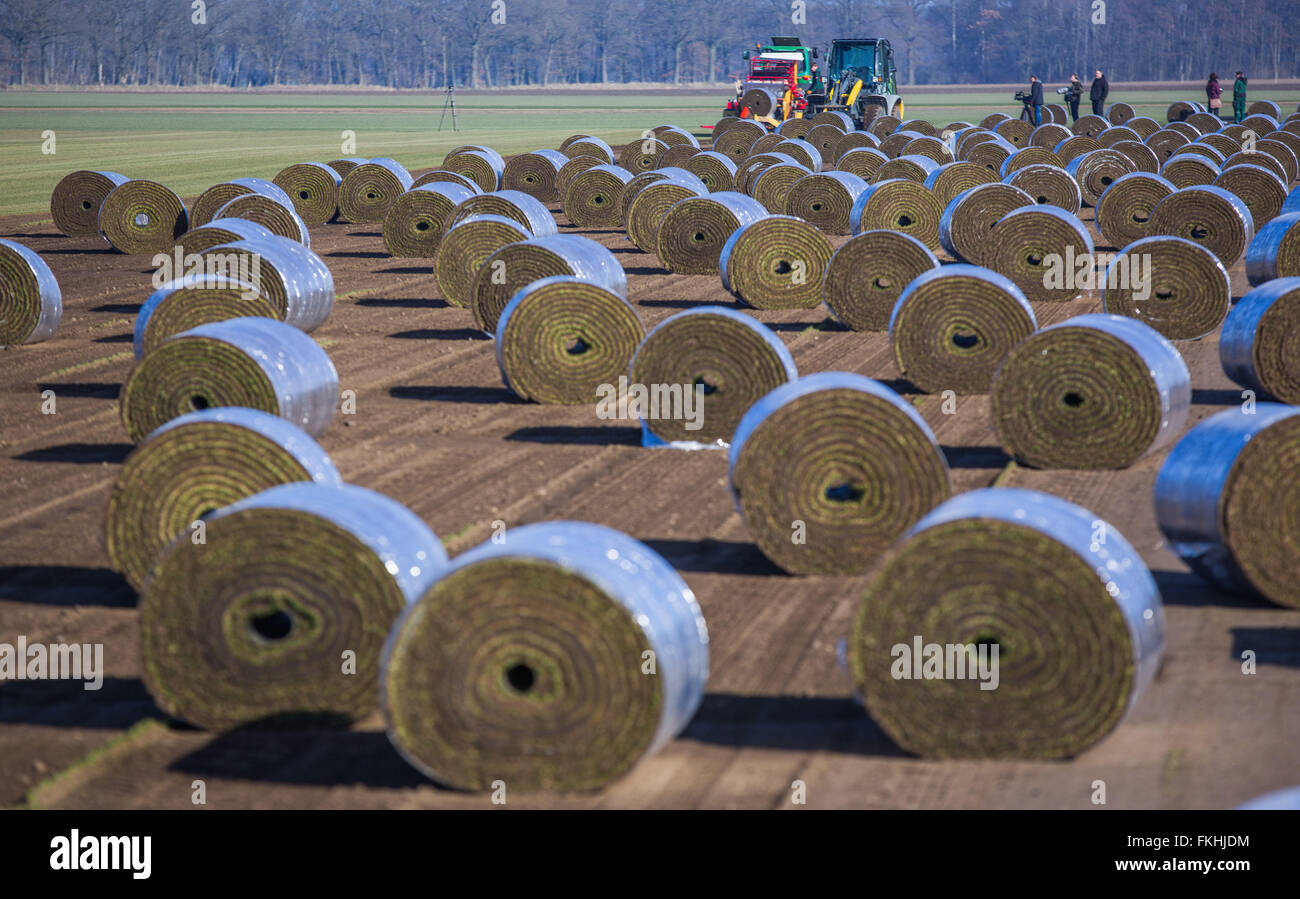 Staff members operate special machines that peels and rolls up metres long sod lawn from the field near Alt Zachun - Stock Image