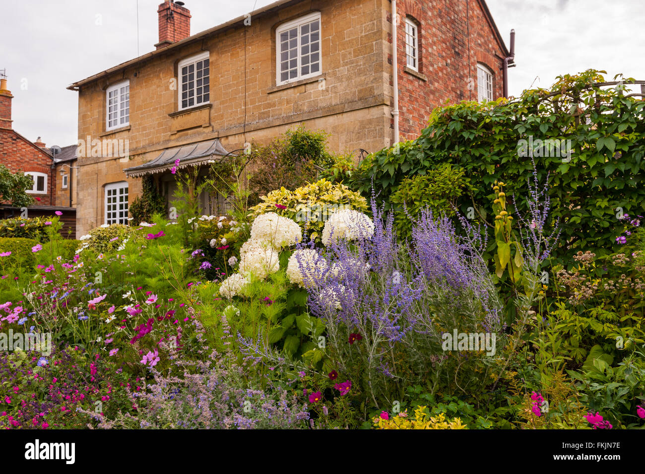 Blooming flowers in the garden of a pair of Cotswold cottages in Chipping Campden , Gloucestershire , England , - Stock Image