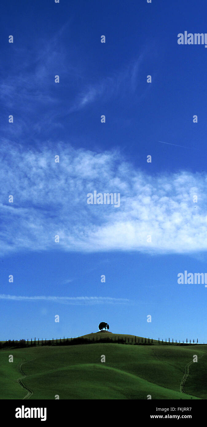 tree on hill - Stock Image