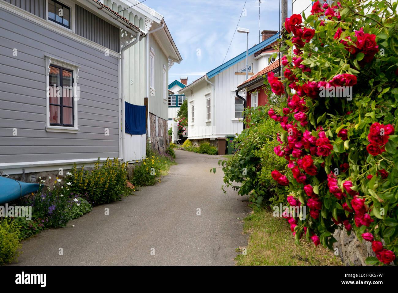 Street scene with red roses, Hälleviksstrand, Orust, Bohuslän Coast, Southwest Sweden, Sweden, Scandinavia, - Stock Image
