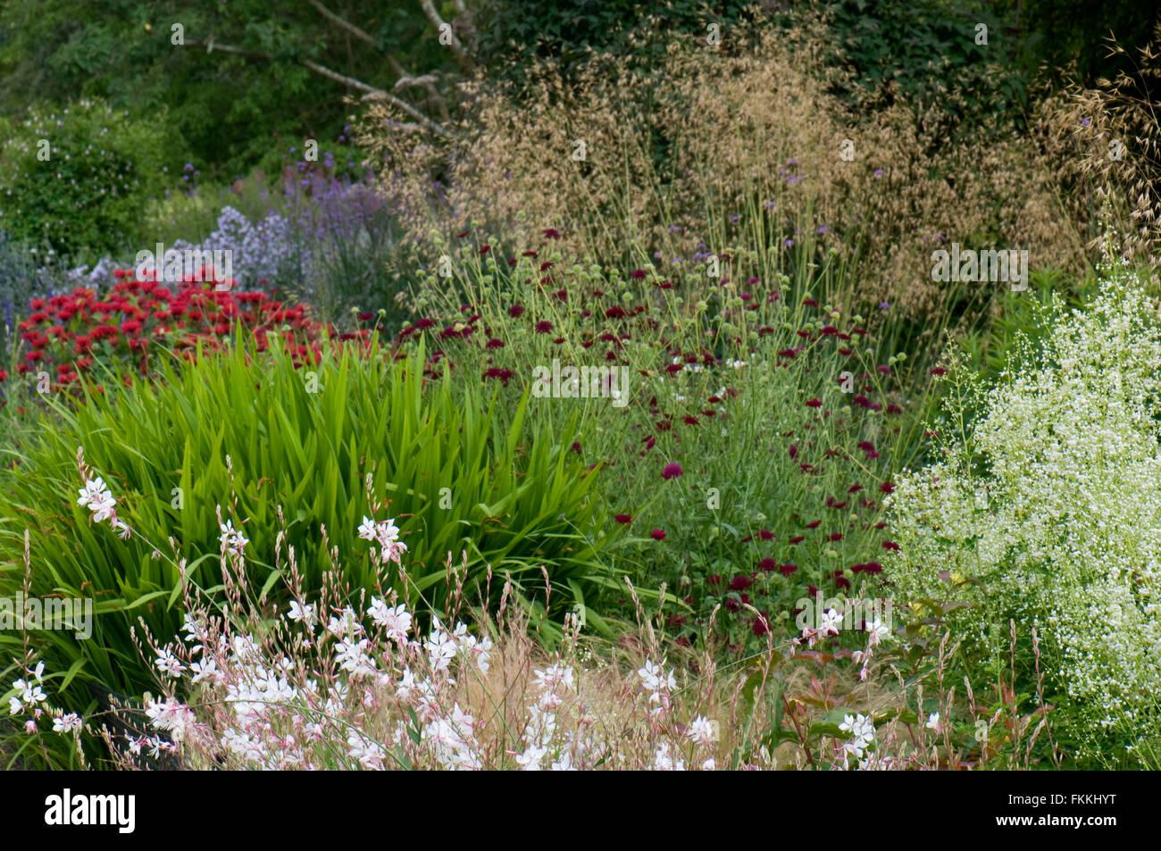 Mixed herbaceous border in summer. Including Gaura 'Whirling Butterflies', Crocosmia, Monarda, Stipa and Knautia Stock Photo