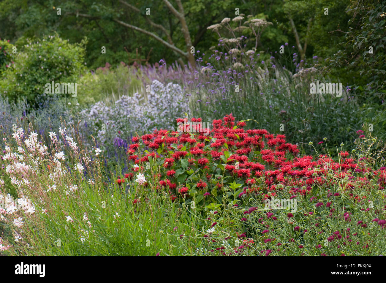 Mixed herbaceous border including Monarda 'Panorama Red Shades', Gaura lindheimeri 'Whirling Butterflies' - Stock Image