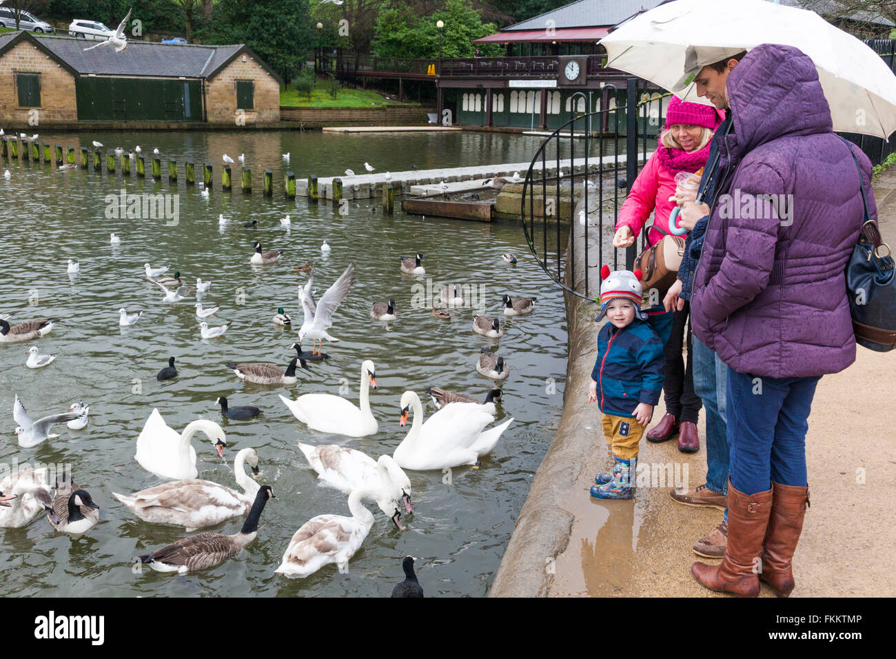 A young family feeding the ducks on a wet day at Roundhay Park, Leeds, Yorkshire UK Stock Photo