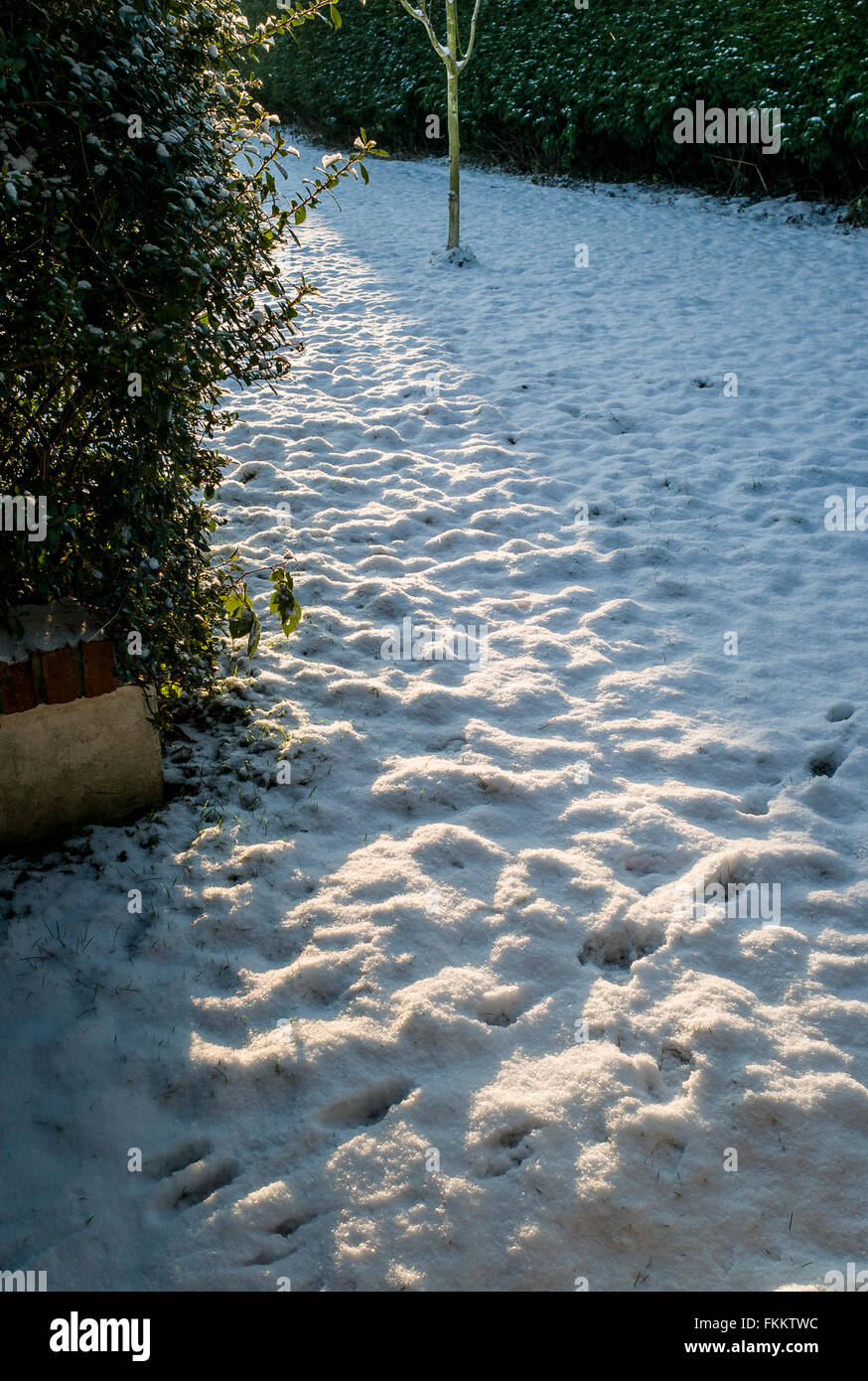 Glancing sunlight over a small lawn covered in snow in winter - Stock Image