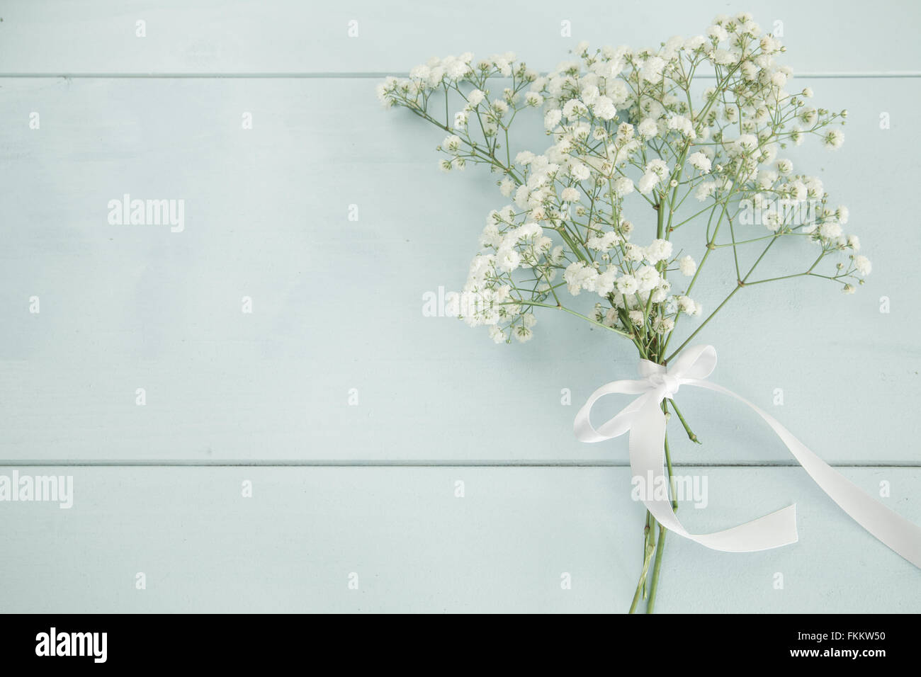 Baby S Breath White Background High Resolution Stock Photography And Images Alamy