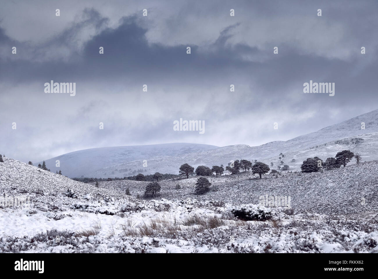 Storm clouds over snow covered Glenmore Forest Park, Cairngorms in the Scottish Highlands, UK. - Stock Image