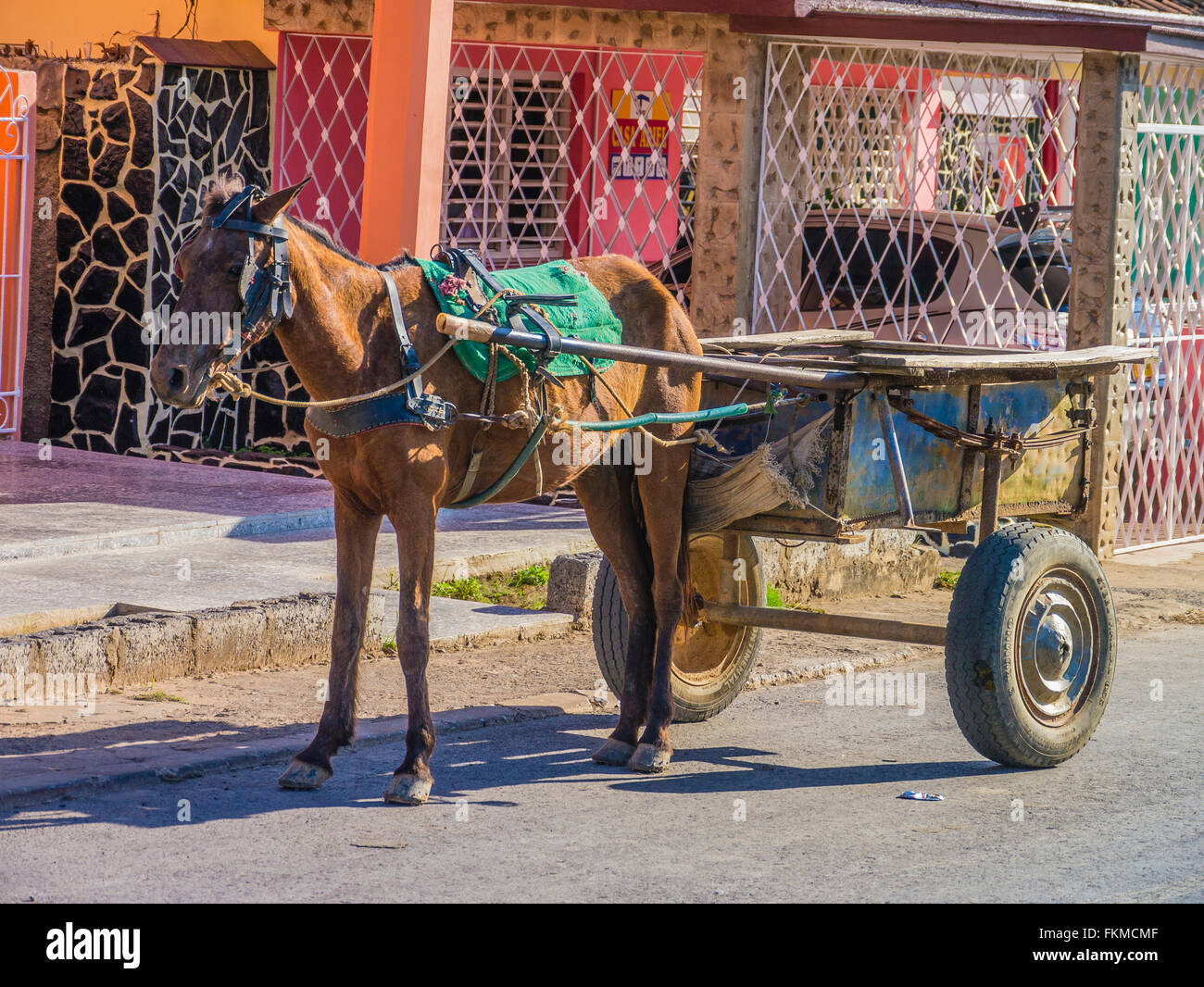 Working horse hitched to two-wheeled cart in Cuba waiting for his owner. - Stock Image