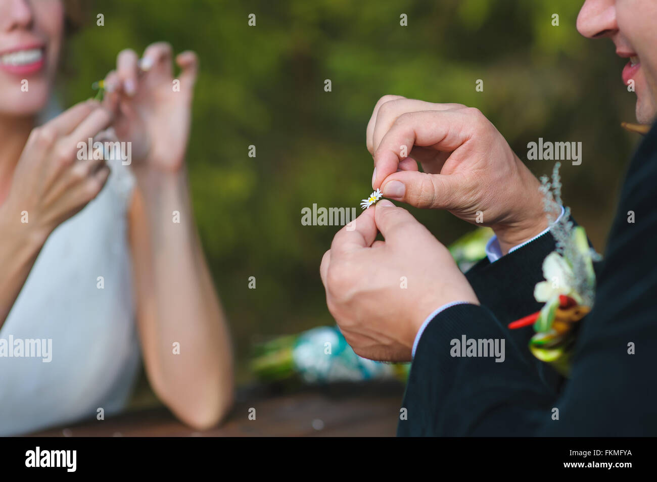 Guessing on the chamomile petals, bride and groom sit opposite each other and tear off daisy petals. focus on the - Stock Image