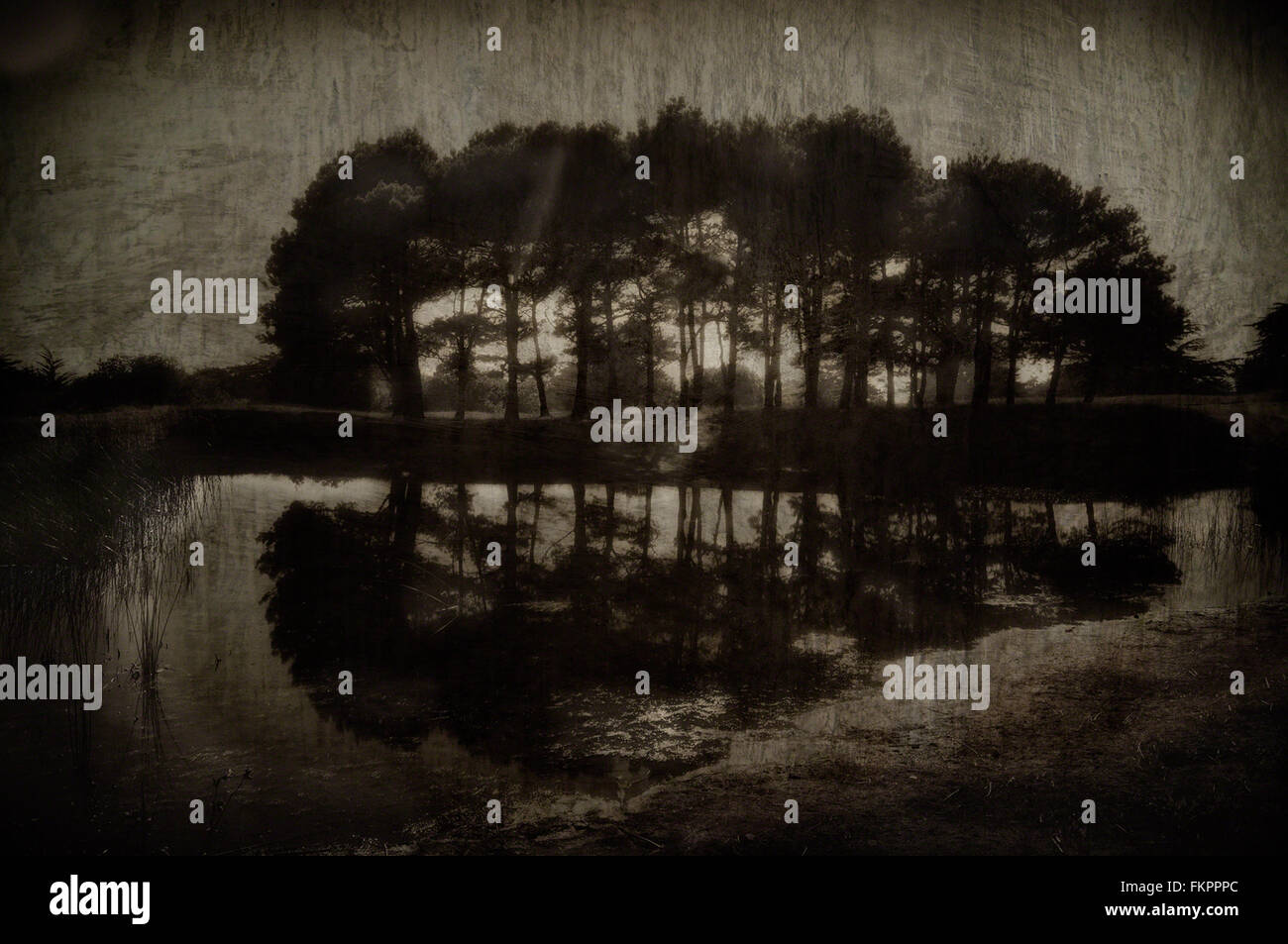 Grove of trees next to a pond. textural overlay added and sepia-toned to make the image look vintage. - Stock Image