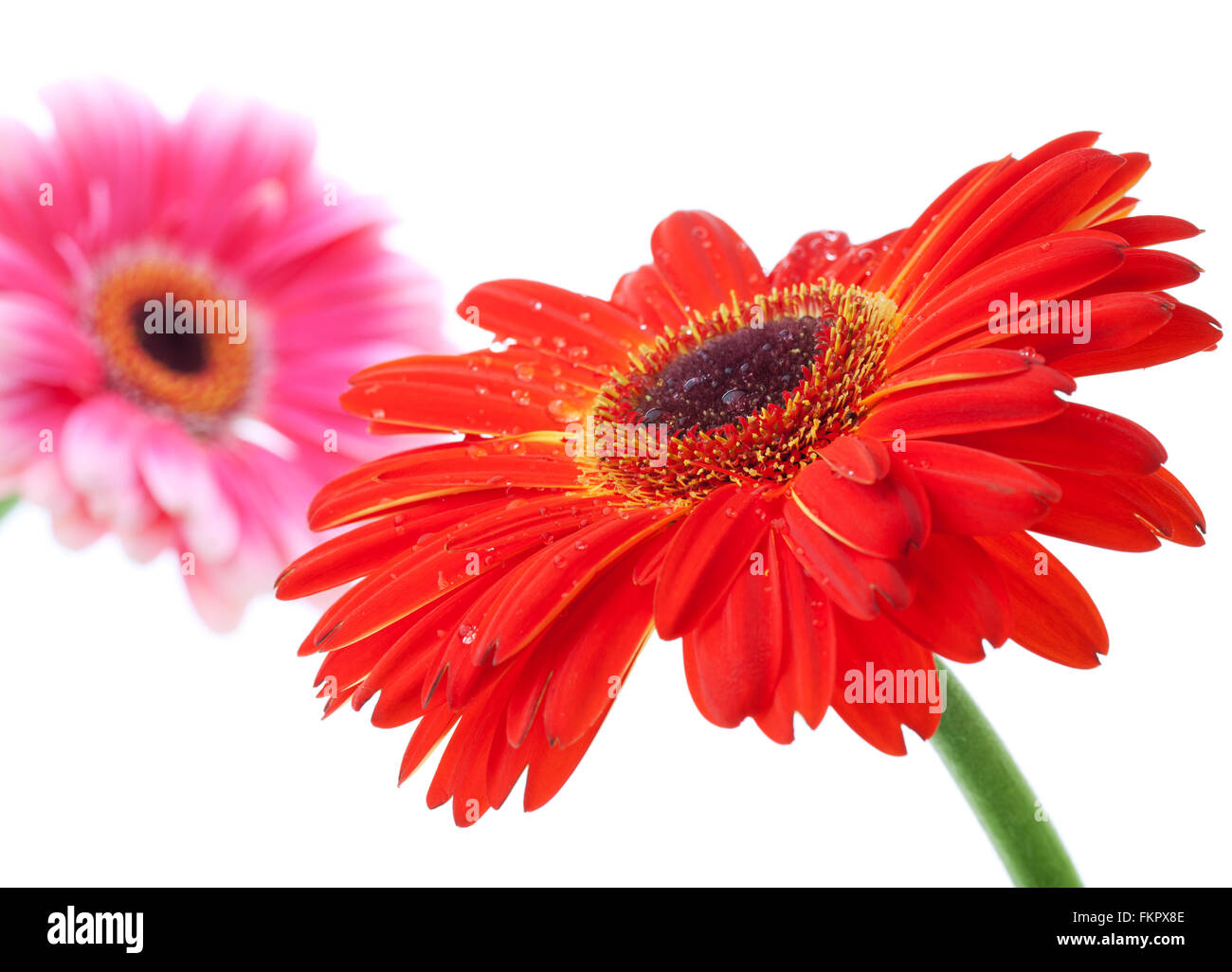 Pink Small Flowers On Green Stock Photos Pink Small Flowers On