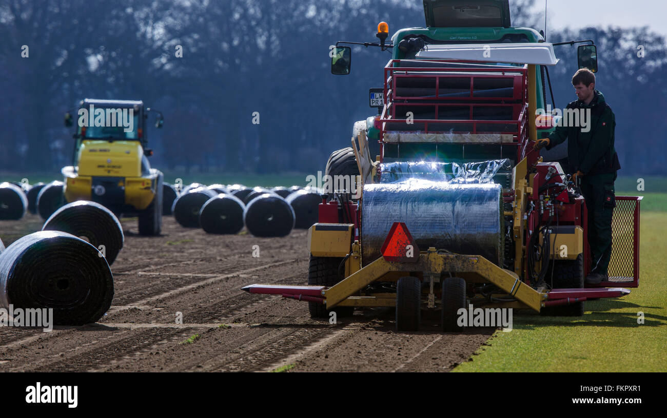 Alt Zachun, Germany. 8th Mar, 2016. Staff members operate special machines collecting finished grown sod lawn near - Stock Image