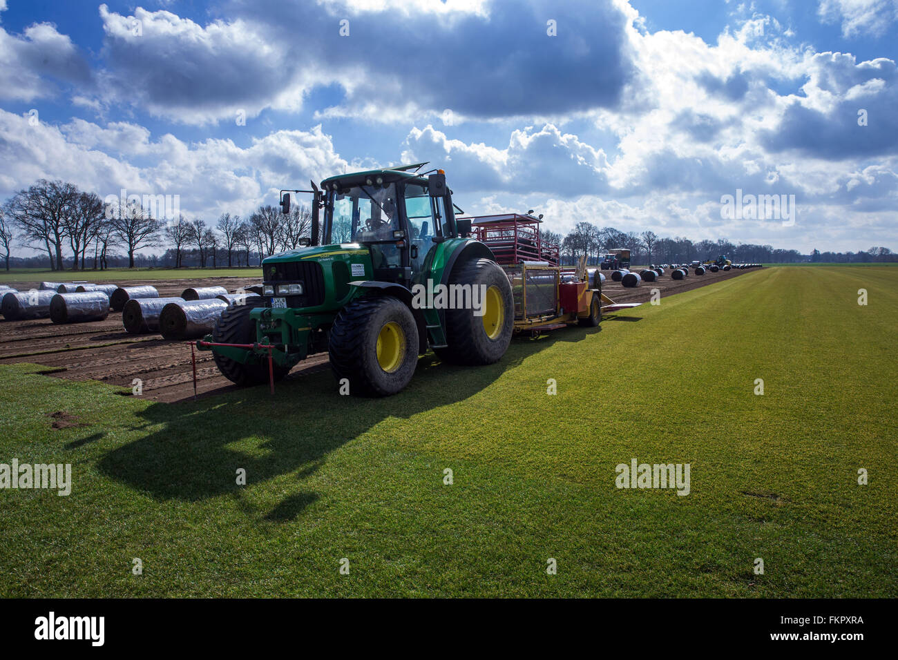 Alt Zachun, Germany. 8th Mar, 2016. A staff member operates a special machine collecting finished grown sod lawn - Stock Image