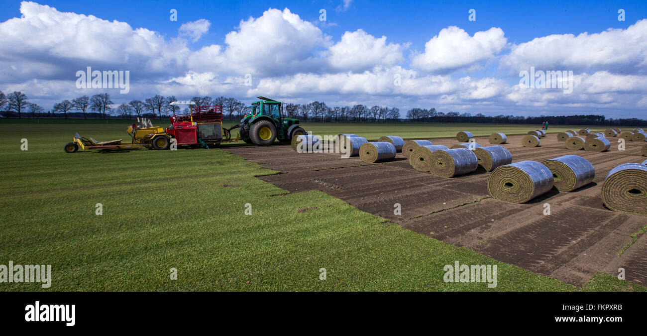 Alt Zachun, Germany. 8th Mar, 2016. Special harvesting machines collect finished grown sod lawn near Alt Zachun, - Stock Image