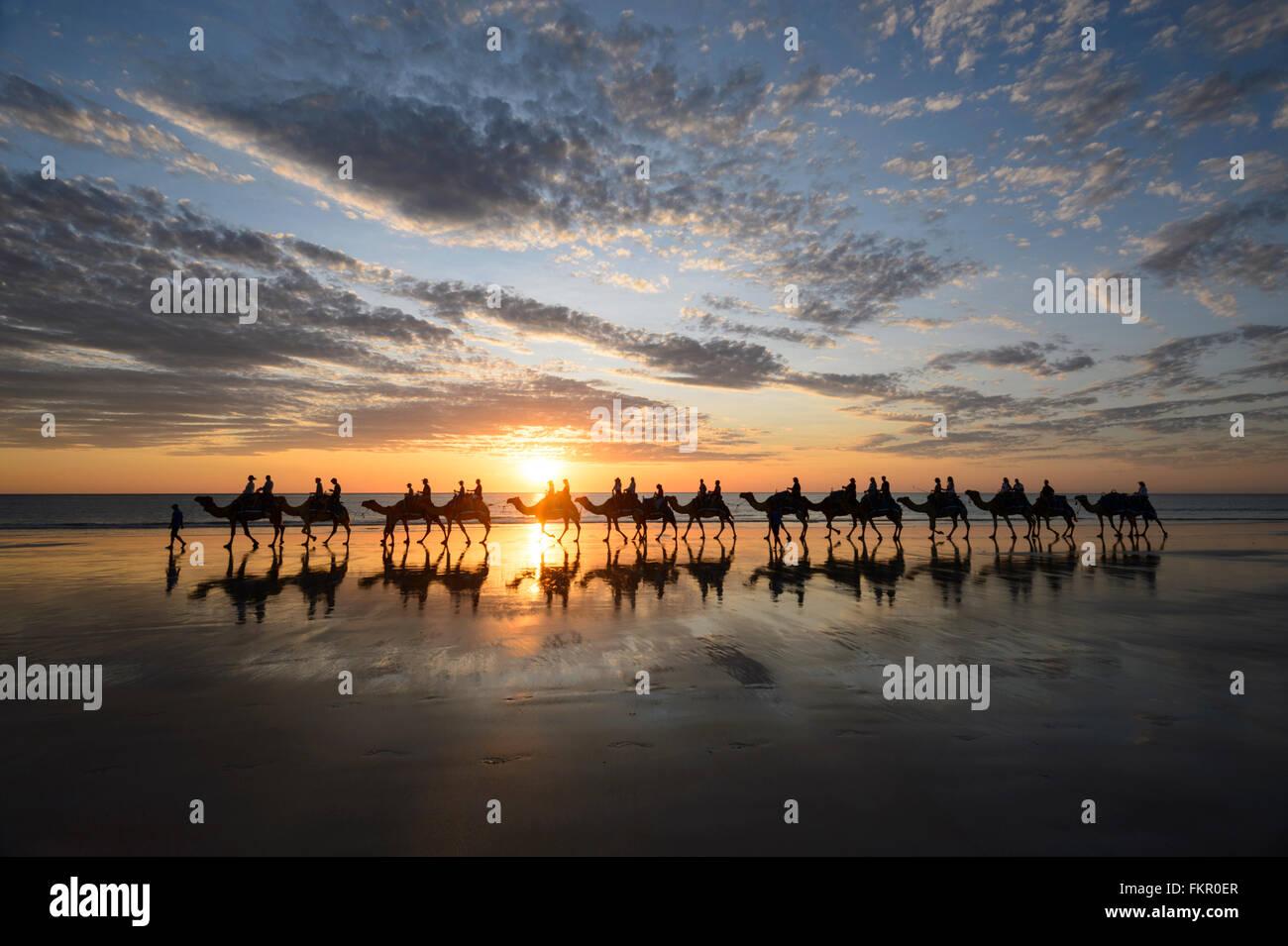 Tourist camel train on Cable Beach at sunset, Broome, Kimberley Region, Western Australia, WA, Australia - Stock Image