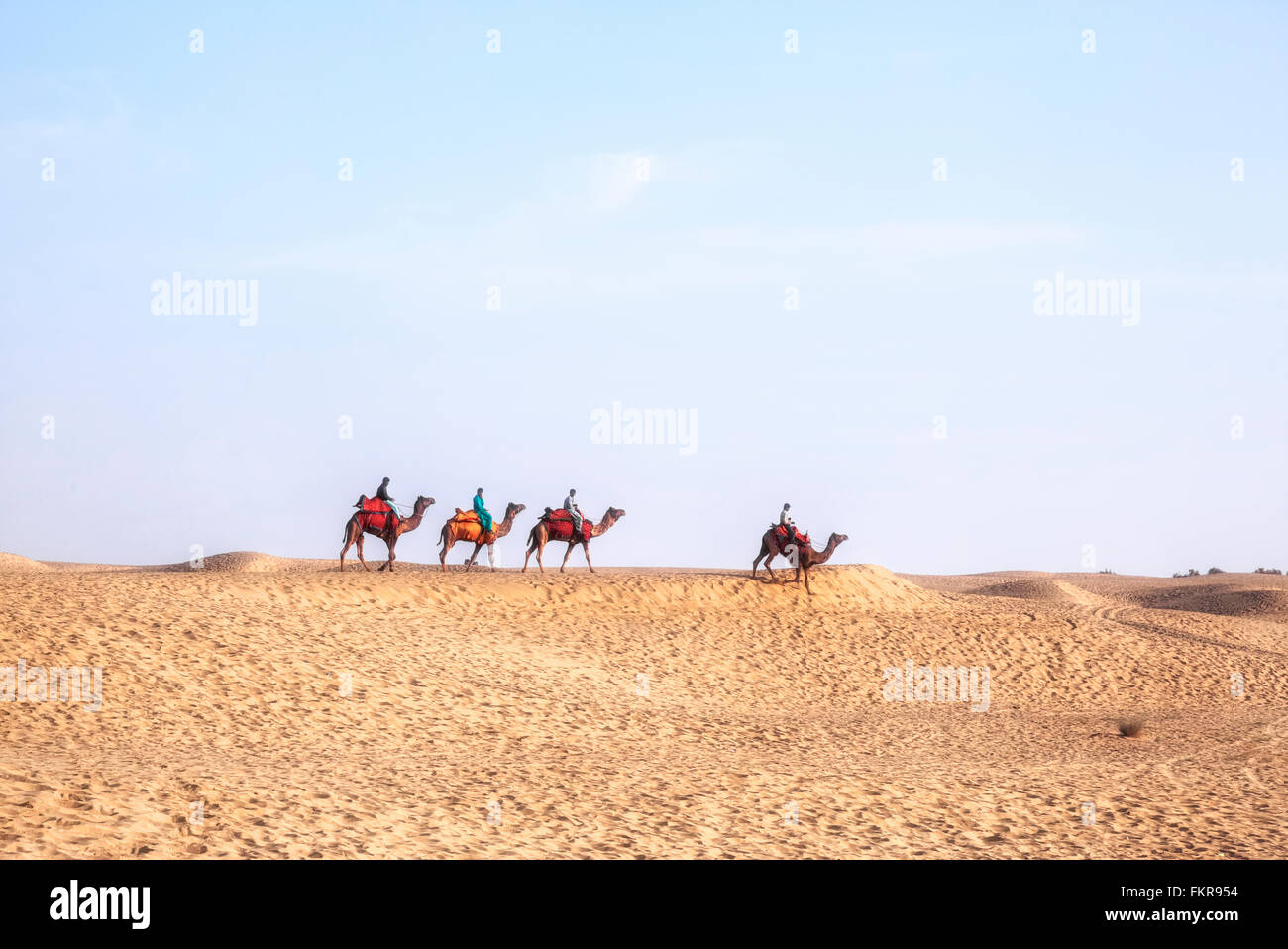 Nomadic people on camels in the Thar desert, Rajasthan, India - Stock Image
